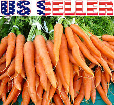 100+ ORGANIC Imperator 58 Carrot Seeds Heirloom NON-GMO Sweet Crisp Juicy Long