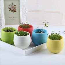 Candy color office desk mini planter DIY with Seads and Soil Mini Planters