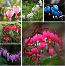 10PCS Perennial Herbs Dicentra Spectabilis Flower Plant Bleeding Heart Seeds Hot