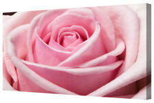 Beautiful Pink Rose Flower LARGE Floral Framed Canvas Picture Wall Art Print A1