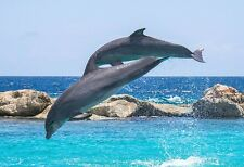 Two Dolphins Jumping At Play - Dolphin Poster Art - Dolphin Photo - Aquatic Art