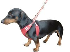 HDP No Pull No Chock Puppy Dog Harness and Lead Combo