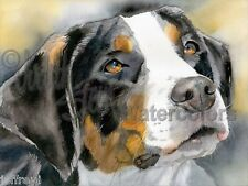 Greater Swiss Mountain Dog GSMD Signed Art Print of Watercolor Painting SWISSY