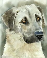 Anatolian Shepherd Dog Art Print of Watercolor Painting Judith Stein Signed