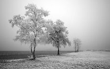 Winter Trees Home Decor Canvas Print, choose your size.