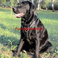 Labrador Harness UK | Padded Dog Harness for Labrador Retriever and Large Dogs