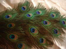 Peacock Eye Feathers - Cruelty Free - Stunning 20 pc. Bouquets