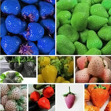 100 PCS 9 colors Strawberry Seeds Fruit Vegetables Seed Nutritious Delicious