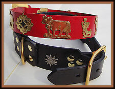 Appenzeller dog collars ( leather ) with brasses from Switzerland ( M - L sizes)