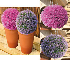 NEW 30CM SOLAR POWERED HEATHER TOPIARY BALL WITH 20 LED LIGHTS DUAL FUNCTION