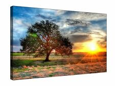 Golden Sun Lonesome Tree - Gallery Grade Canvas Wall Art + Various sizes