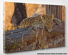 X LARGE CANVAS Stunning Leopard Resting on Tree Animal Photo Picture Wall Art A1
