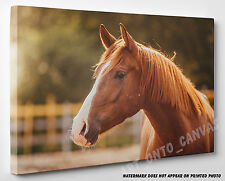 X LARGE CANVAS Stunning Brown Horse In The Paddock Animal Photo Picture Wall Art