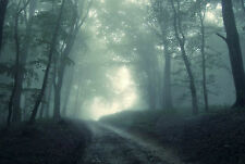 Large Framed Print - Trail through a Dark Grim Gothic Forest (Picture Poster Art
