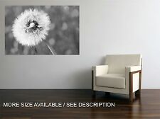 Canvas Print Picture Dandelion Black&white/ Stretched -ready to hang
