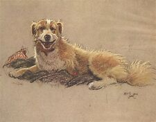 Cecil Aldin A Dozen Dogs or So Number 2 of 13 Vintage Print on Gloss Photo Paper