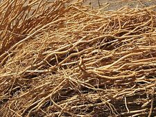 Vetiver Roots/Khus-Khus/vetiveria zizanioides (Top Quality Roots)