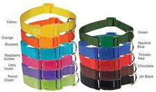 NYLON DOG COLLAR - Quick Release Buckle Asst Colors/Sizes to choose from