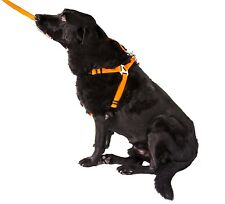 GoGo Pet Products NYLON DOG HARNESS dogs lead ANY SIZE OR COLOR best quality