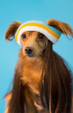 Mullet on the Go Dog Mullet Costume: Choose from All American or Beachcomber