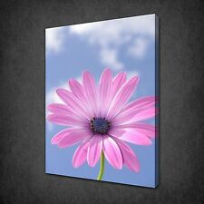 PINK DAISY FLOWER CLOUDS MODERN WALL ART CANVAS PRINT PICTURE READY TO HANG