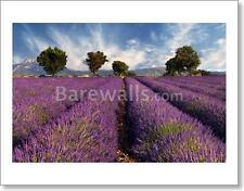 Lavender Field In Provence, France - 5