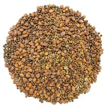 Spicy Sprouting Seeds Mix - Alfalfa Radish and Broccoli  (0.5 to 5 lbs)