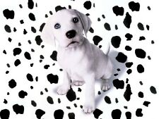 DALMATION PUPPY NO SPOTS GLOSSY POSTER PICTURE PHOTO dog 101 puppies cute 827