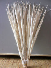 Wholesale,10-100 pcs 50-55 cm / 20-22 inch  white pheasant tail feathers