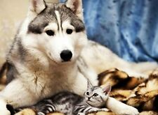 Wolf Dog and cat personalized poster animal wall art room home decor made in USA
