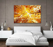 LARGE AUTUMN FOREST TREES YELLOW LEAVES CANVAS WALL ART PICTURE STUNNING PRINT