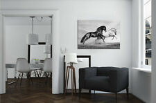 LARGE FRAMED CANVAS WALL ART BLACK & WHITE HORSE PICTURE STUNNING NEW PRINT