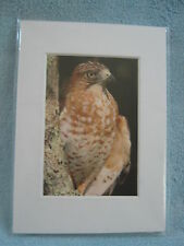 Matted 7 x 5 Photograph Signed Prints - Nature - Birds