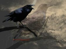 Crow Bird Double Exposure Black Brown Rustic Home Decor Art Matted Picture A663