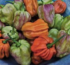 Habanero Mustard  Pepper seed -Capsicum Chinense- Outrageously colorful Habanero