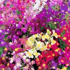 Toadflax Seeds - Northern Lights Mix a.K.a Baby Snapdragon-Pot filler or border!