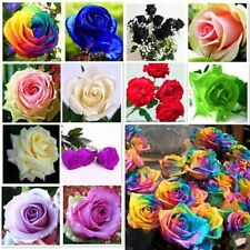 10 Color rare Rose Seed Colorful Seeds For Your Lover Petal Plants Home Garden