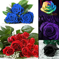 100Pcs Multi-colors Flower Plant  Seeds Holland Rose Seeds Lover Gift Garden