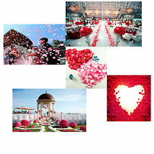 200pcs Rose Silk Flower Petals Multi-Colors Beach Wedding Decorations Leaves New
