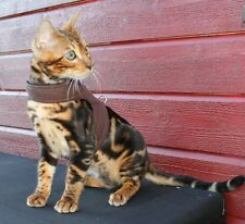 Mynwood Cat Walking Jacket Harness Vest Holster - Escape Proof
