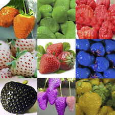WOW 10 Colors Strawberry Seeds Red Black Blue Everbearing Fruit Plants Garden
