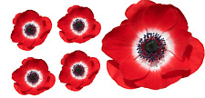 Poppy Flower Decals Car Stickers Graphics Nursery Wall Window Decorations Art