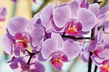 Orchid Photo Wall Paper – Orchids Flower Mural – Beautiful Flowers XXL Wall