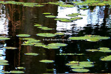 Waterlilies Reflections Water Tree Abstract Art Photograph, Mounted Print, Cards