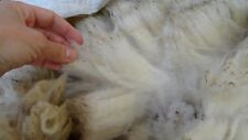 1906g Rare Raw Clun Forest Sheep Wool Fleece Fibers new seasons 2018