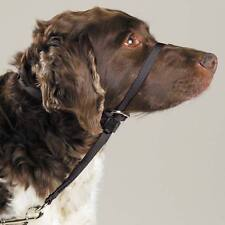 Gentle Leader Dog Training Headcollars Safely Teach Your Pup to Walk Straight