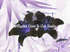 Contemporary Black Purple Lily Flower Home Decor Wall Art Matted Picture A119