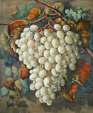 Grapes~counted cross stitch pattern #277~Flower Nature Fruit Graph Chart
