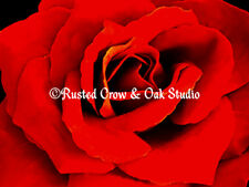 Contemporary Red Rose Flower Floral Home Decor Art Print Matted Picture USA A218