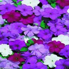 Impatiens Flowers Seed - Blues Mix- ideal for Baskets,Containers & window boxes